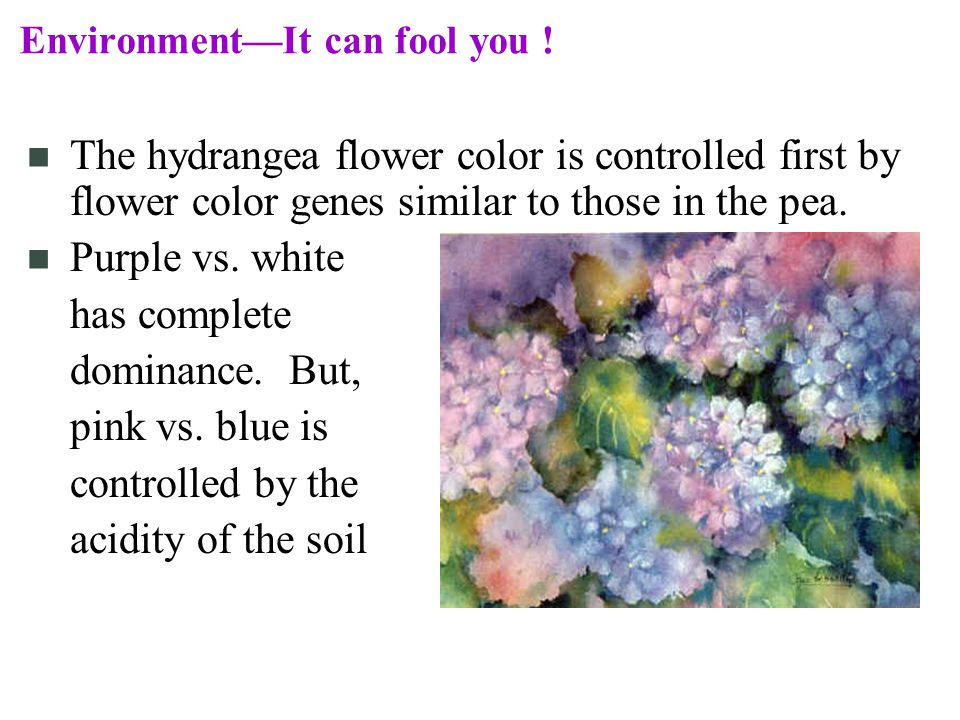 EnvironmentIt can fool you .