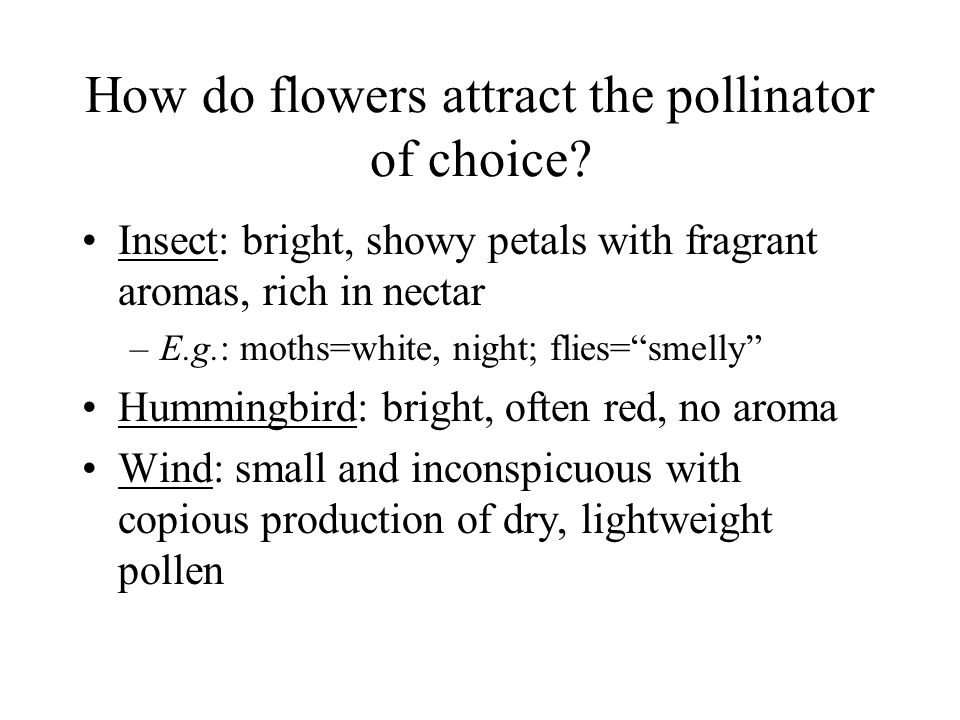 How do flowers attract the pollinator of choice? Insect: bright, showy petals with fragrant aromas, rich in nectar –E.g.: moths=white, night; flies=sm