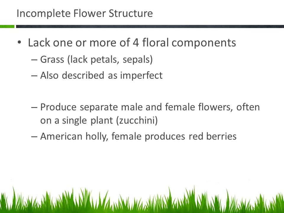 Incomplete Flower Structure Lack one or more of 4 floral components – Grass (lack petals, sepals) – Also described as imperfect – Produce separate mal
