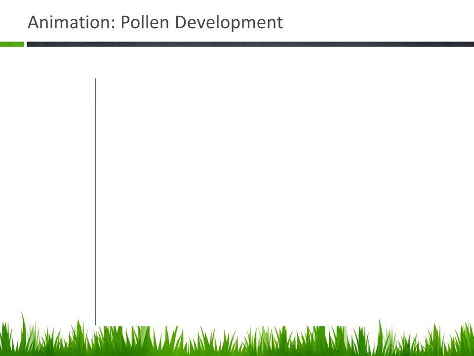 Animation: Pollen Development