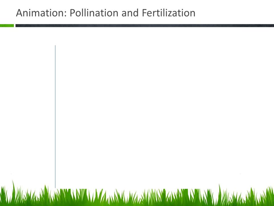 Animation: Pollination and Fertilization