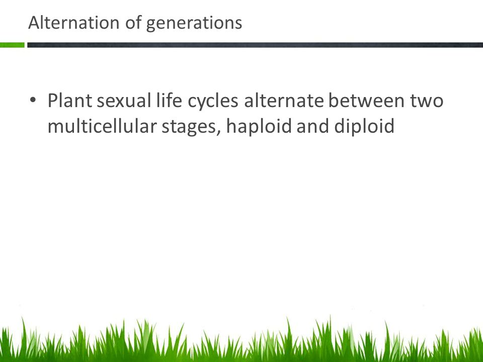 Sexual Life Cycle Sporophyte – multicellular diploid – Garden plants, produce flowers – Produces specialized reproductive cells that undergo meiosis to form haploid spores – Spores undergo mitosis to form multicellular haploid gametophyte Angiosperms and Gymnosperms produce separate male and female gametophyte stages