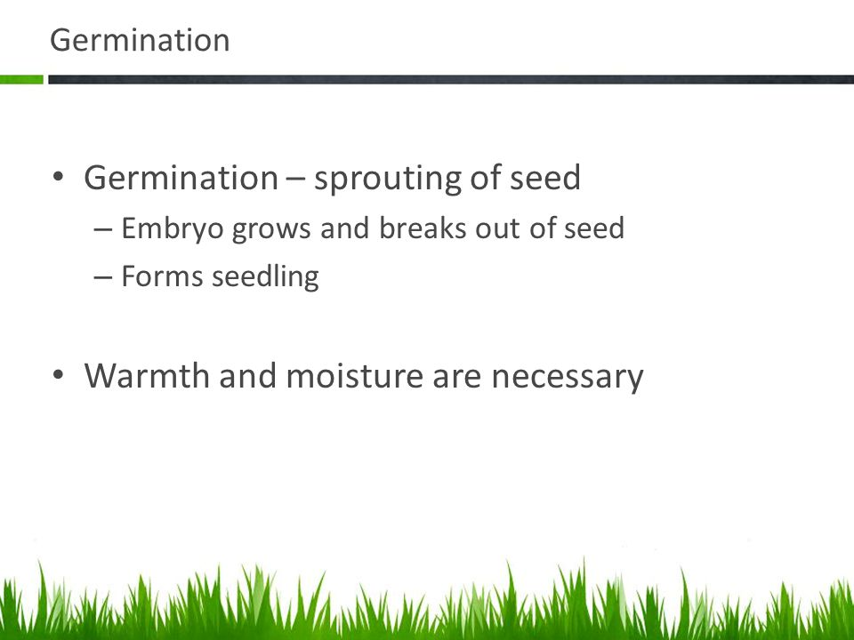 Germination Germination – sprouting of seed – Embryo grows and breaks out of seed – Forms seedling Warmth and moisture are necessary