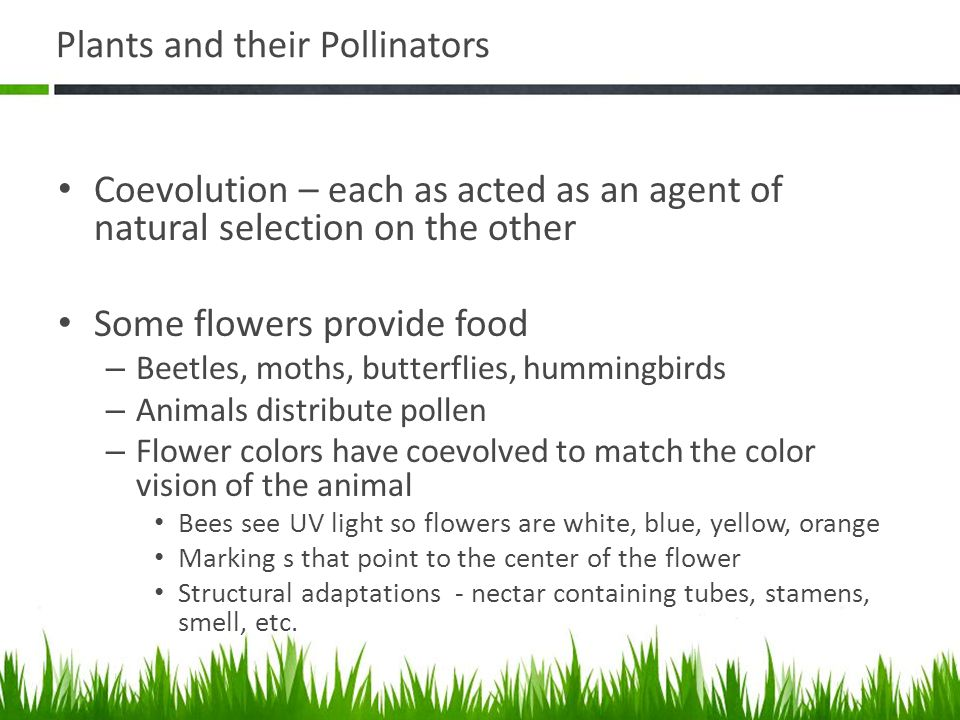 Plants and their Pollinators Coevolution – each as acted as an agent of natural selection on the other Some flowers provide food – Beetles, moths, but