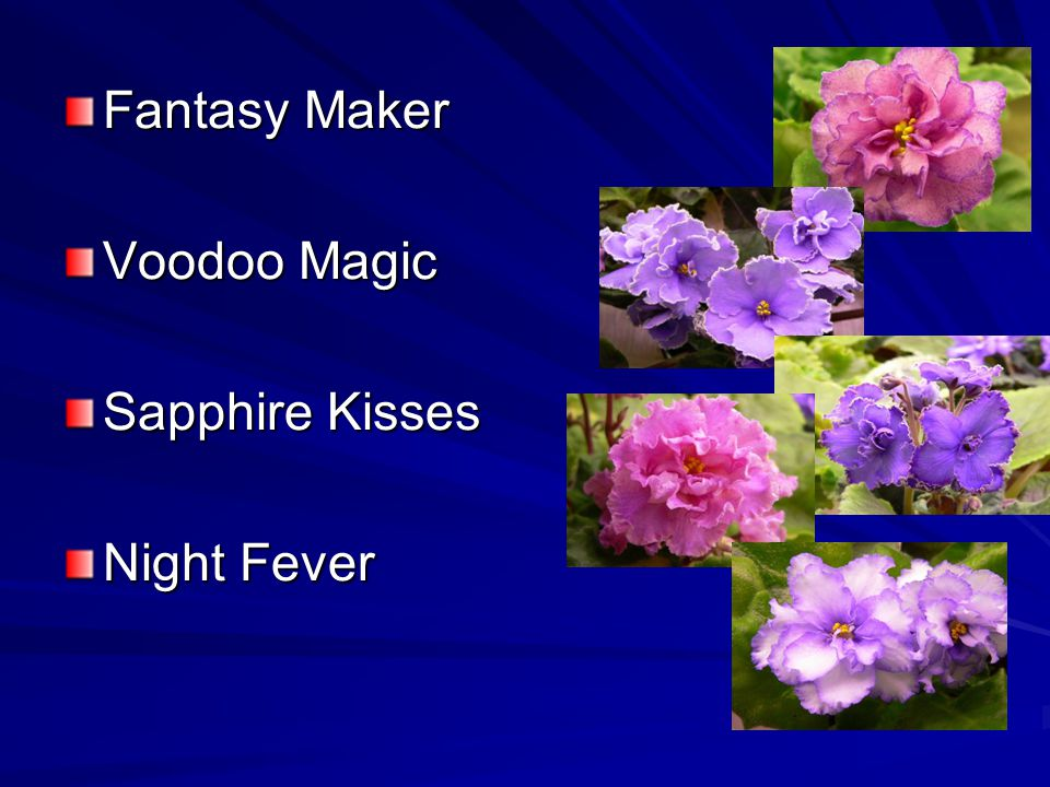 Fantasy Maker Voodoo Magic Sapphire Kisses Night Fever