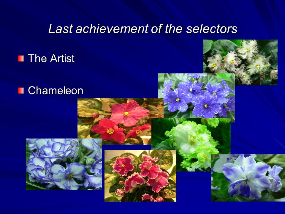 Last achievement of the selectors The Artist Chameleon