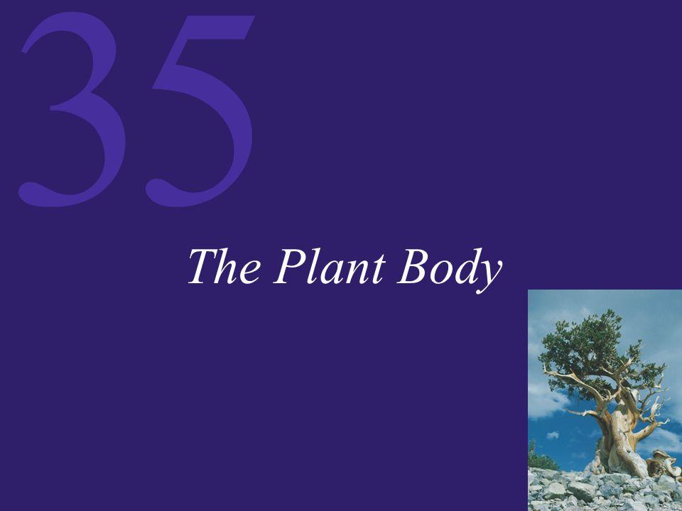35 The Plant Body