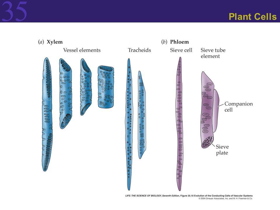 35 Plant Cells