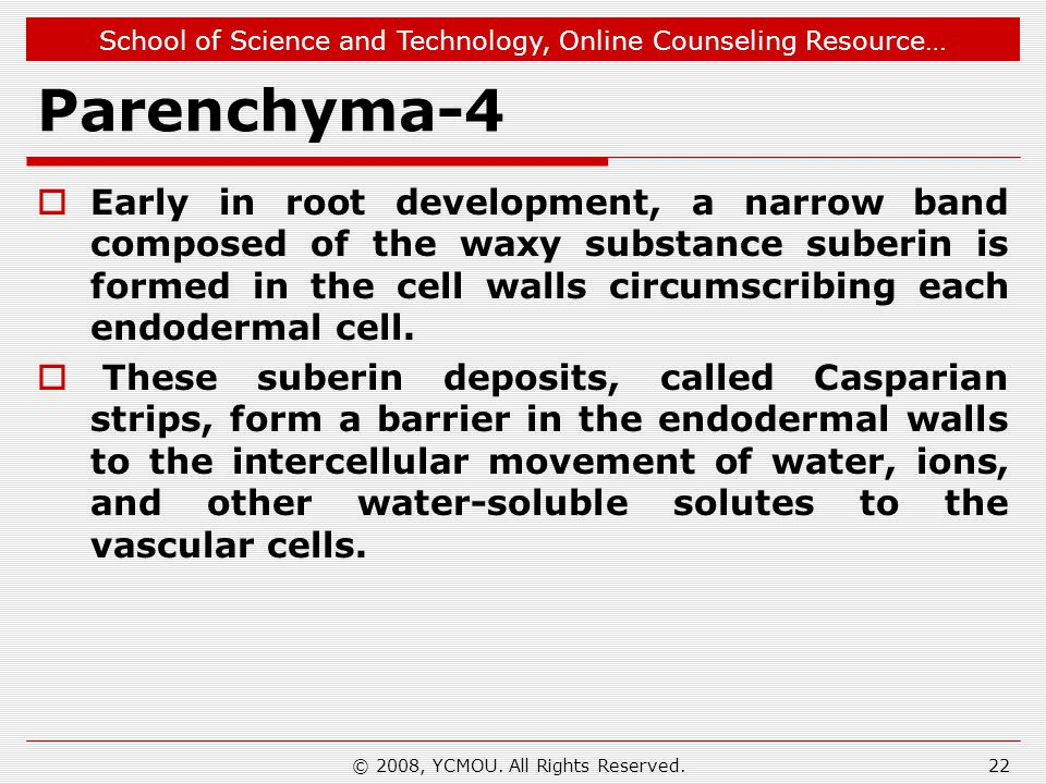 School of Science and Technology, Online Counseling Resource… Parenchyma-4 Early in root development, a narrow band composed of the waxy substance sub