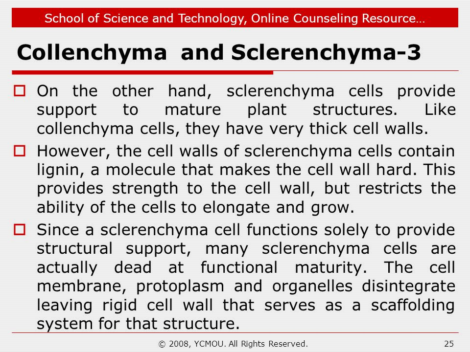 School of Science and Technology, Online Counseling Resource… Collenchyma and Sclerenchyma-3 On the other hand, sclerenchyma cells provide support to