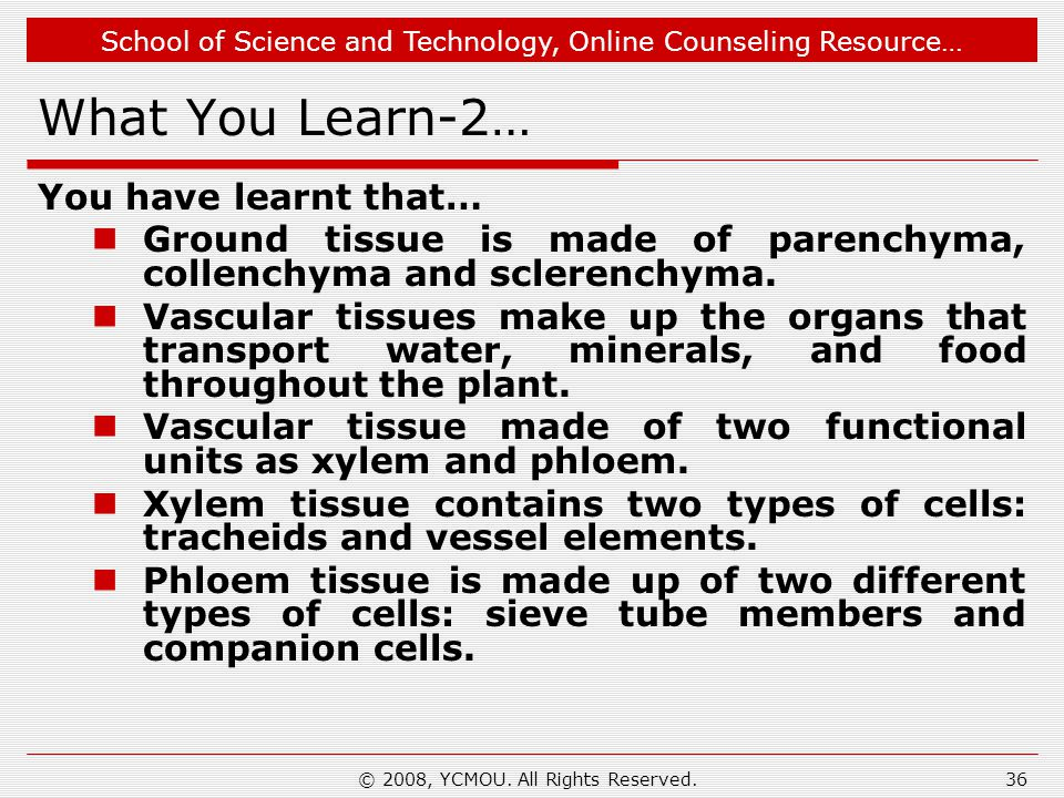 School of Science and Technology, Online Counseling Resource… What You Learn-2… You have learnt that… Ground tissue is made of parenchyma, collenchyma
