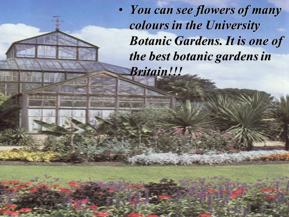 You can see flowers of many colours in the University Botanic Gardens. It is one of the best botanic gardens in Britain!!!You can see flowers of many