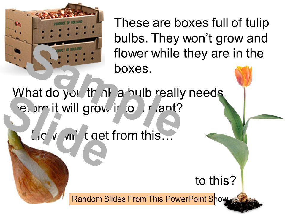 Flowers and Bulbs Bulb Planting Instructions Where do bulbs come from?