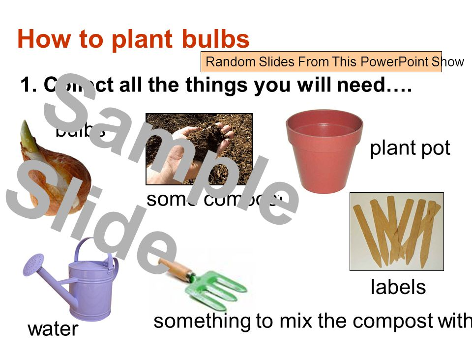 How to plant bulbs 1.Collect all the things you will need….
