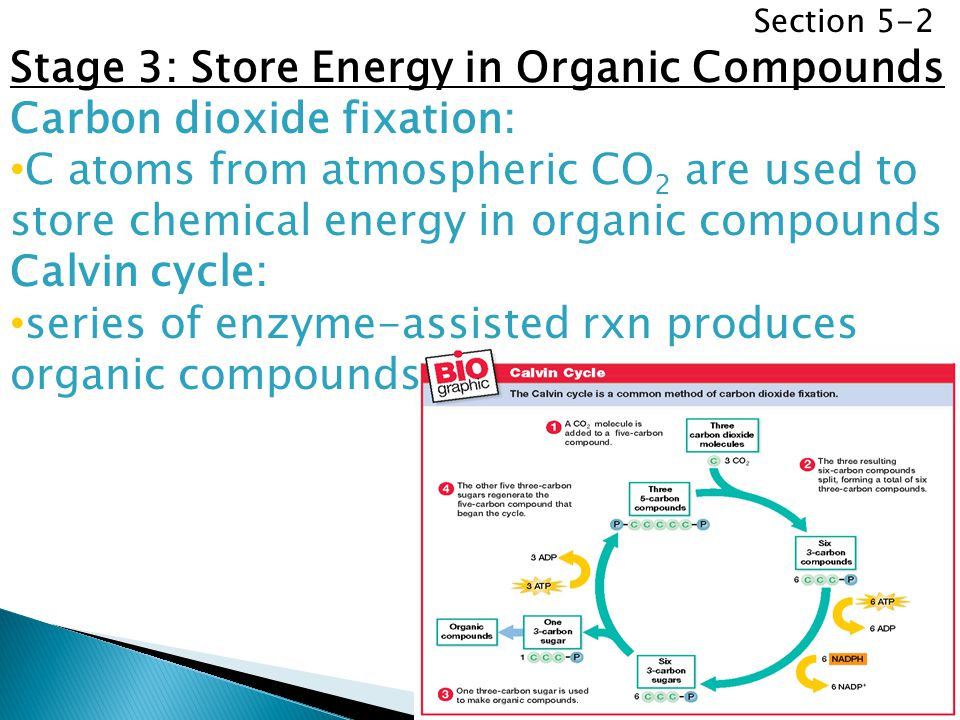 Section 5-2 Stage 3: Store Energy in Organic Compounds Carbon dioxide fixation: C atoms from atmospheric CO 2 are used to store chemical energy in org