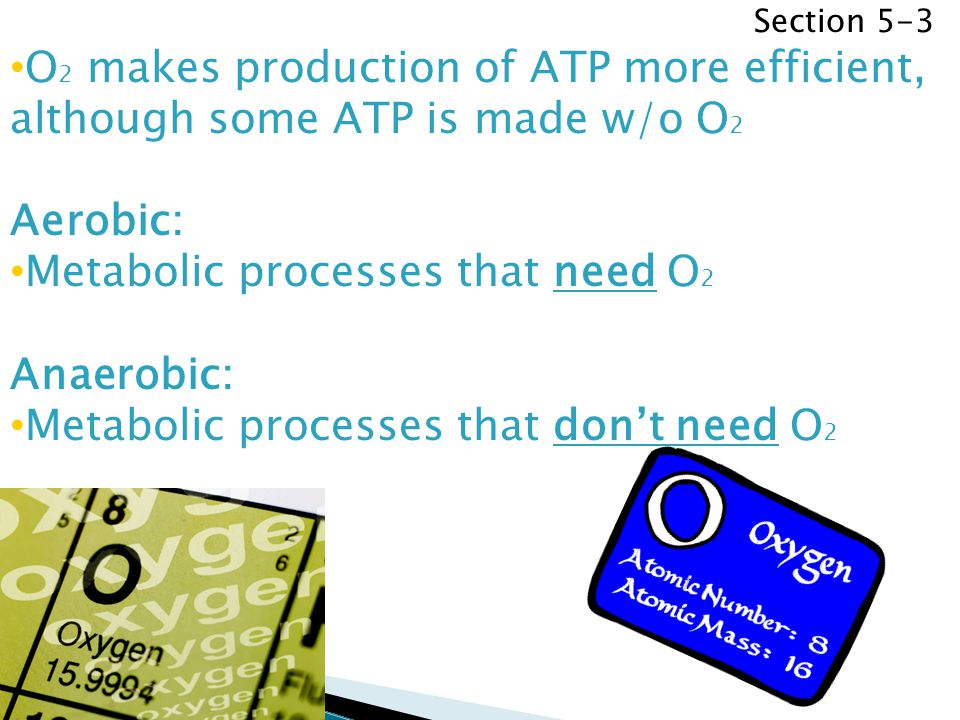 Section 5-3 O 2 makes production of ATP more efficient, although some ATP is made w/o O 2 Aerobic: Metabolic processes that need O 2 Anaerobic: Metabo
