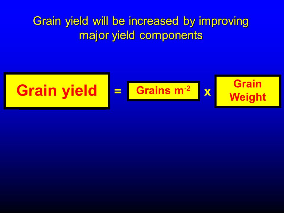 Grain yield Grains m -2 = Grain Weight x Grain yield will be increased by improving major yield components