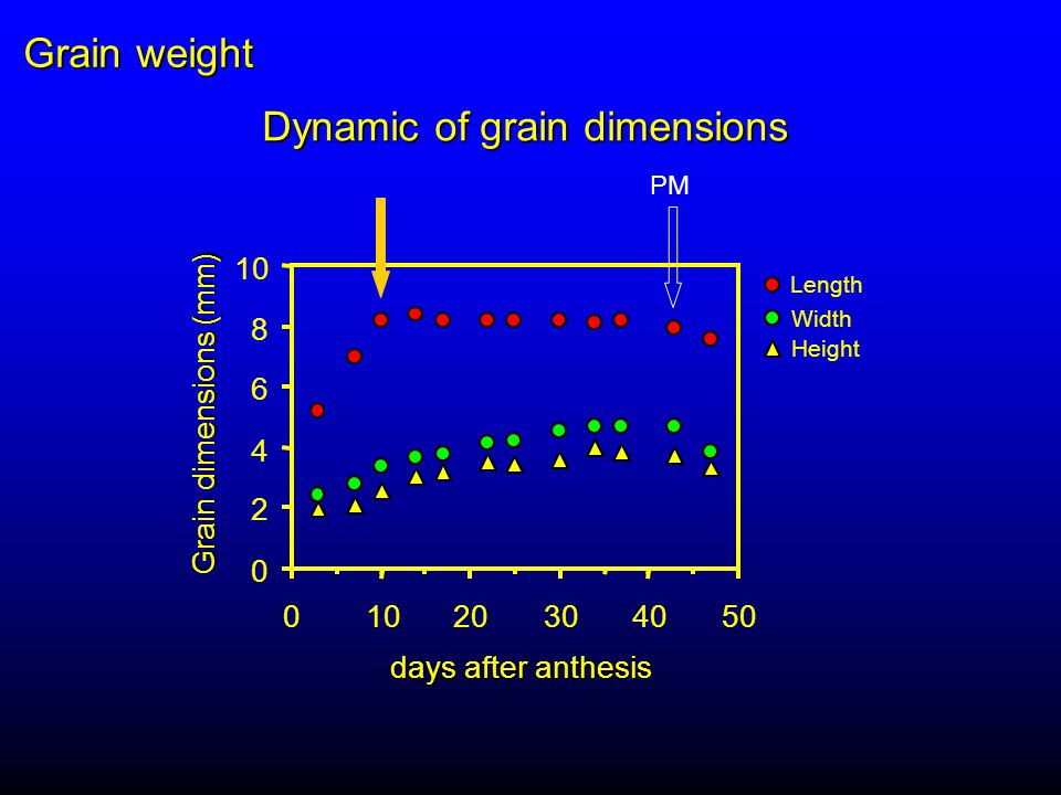 Dynamic of grain dimensions PM 0 2 4 6 8 10 0 20304050 days after anthesis Grain dimensions (mm) Length Width Height Grain weight