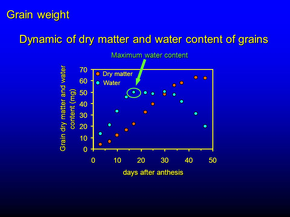 0 10 20 30 40 50 60 70 01020304050 days after anthesis Grain dry matter and water content (mg) Dynamic of dry matter and water content of grains Dry matter Water Maximum water content Grain weight