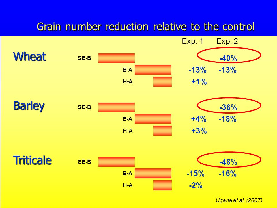 Grain number reduction relative to the control H-A +1% B-A -13% Wheat SE-B -40% Exp.