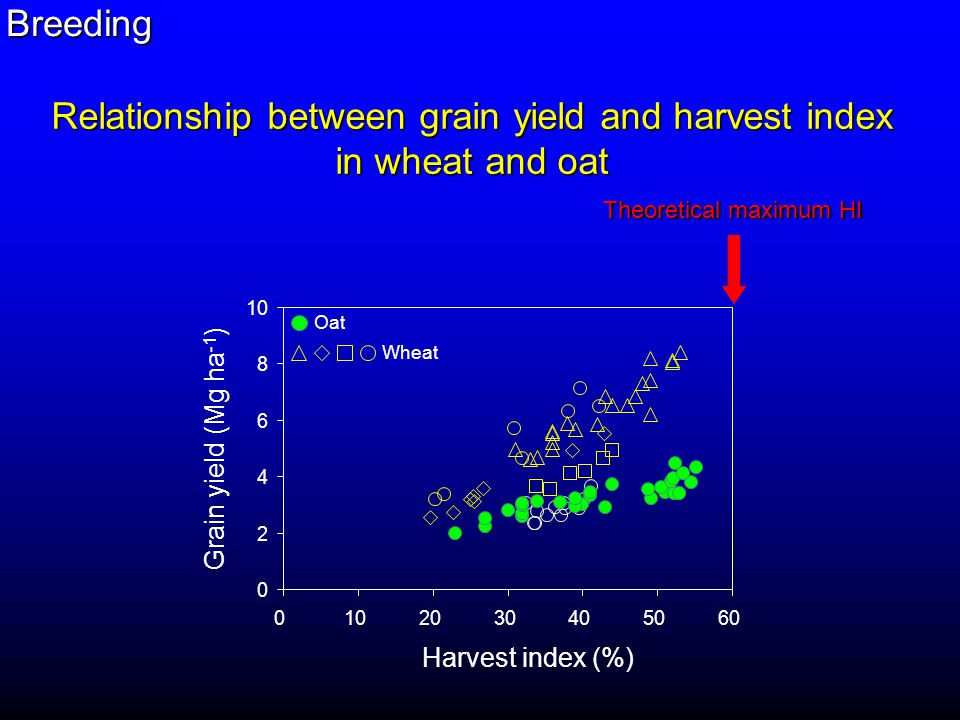 0 2 4 6 8 10 0 2030405060 Oat Wheat Harvest index (%) Grain yield (Mg ha -1 ) Theoretical maximum HI Relationship between grain yield and harvest index in wheat and oat Breeding