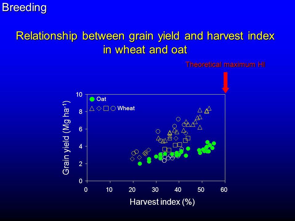 DDSD SH Plant height (cm) Grain yield 70 100 Plant height optimum Richards (1992) Miralles and Slafer (1995) Breeding