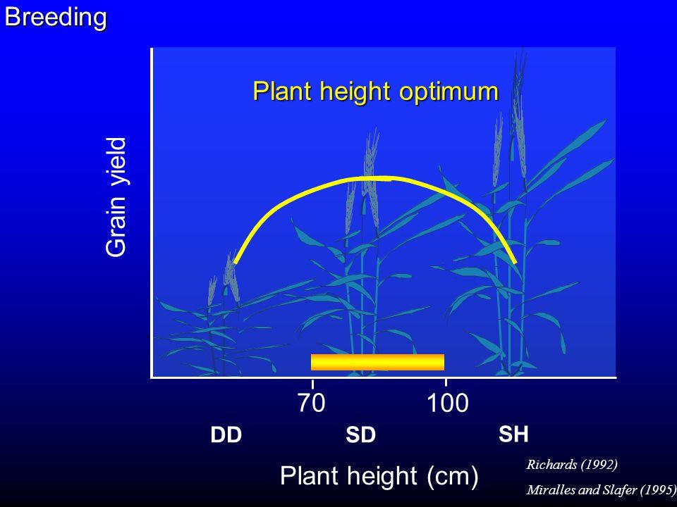 0 20 40 60 80 5678910 Grain length (mm) Grain weight or Maximum Water Content (mg) Relationship between grain weight or maximum water content and grain length GW MWC (r= 0.91; p<0.001) (r= 0.95; p<0.001) Grain weight
