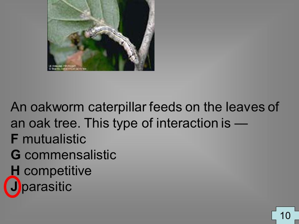 An oakworm caterpillar feeds on the leaves of an oak tree. This type of interaction is F mutualistic G commensalistic H competitive J parasitic 10