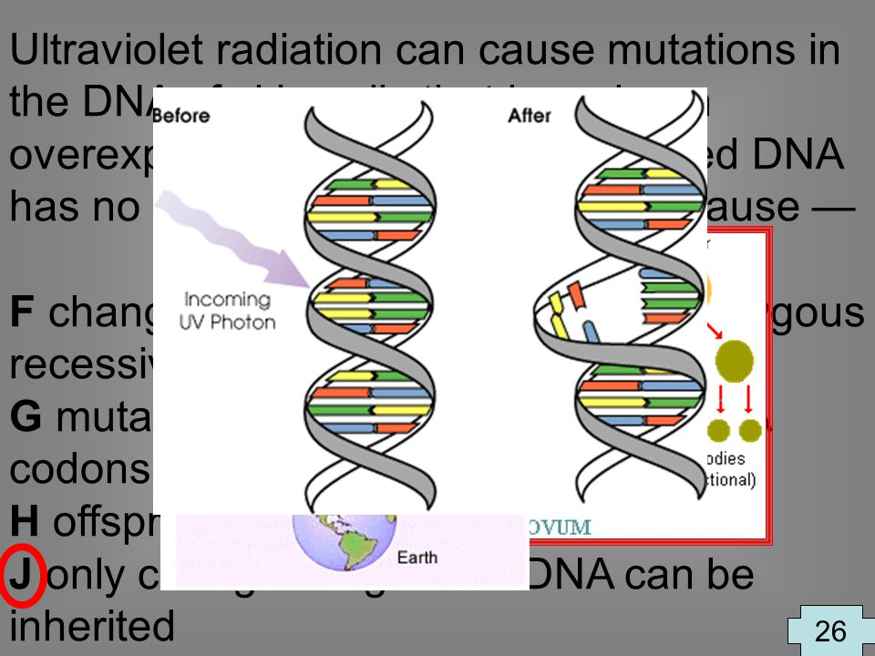 Ultraviolet radiation can cause mutations in the DNA of skin cells that have been overexposed to the sun. This mutated DNA has no effect on future off
