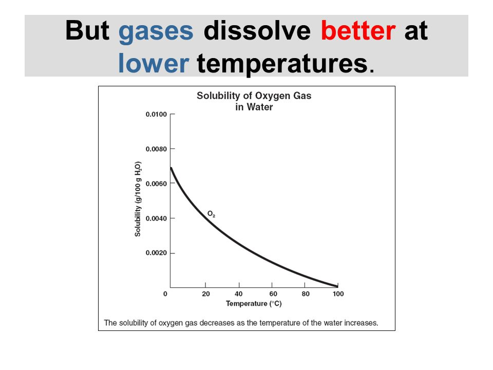 But gases dissolve better at lower temperatures.