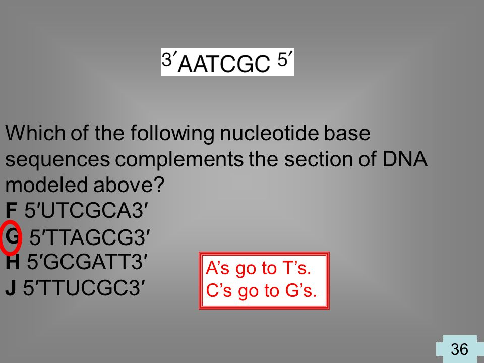 Which of the following nucleotide base sequences complements the section of DNA modeled above? F 5UTCGCA3 G H 5GCGATT3 J 5TTUCGC3 36 As go to Ts. Cs g