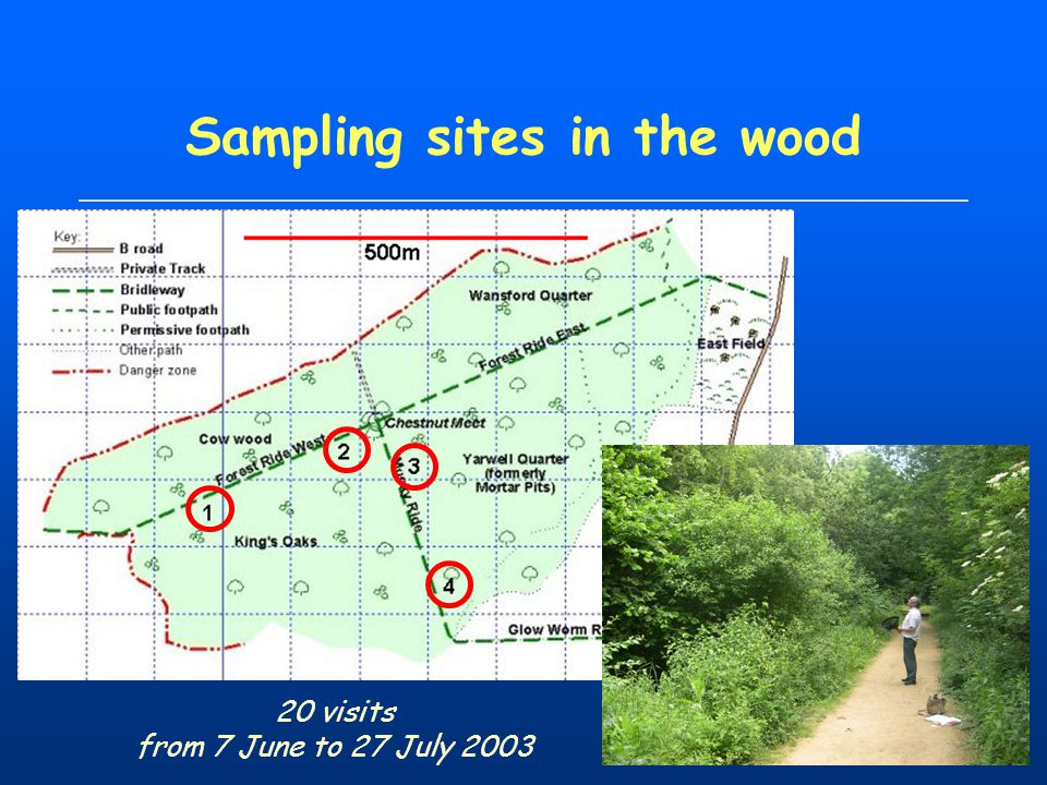 Sampling sites in the wood 20 visits from 7 June to 27 July 2003