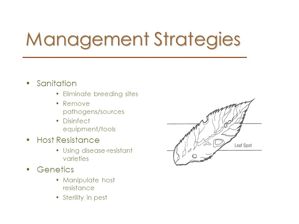 Management Strategies Chemical The use of natural or synthetic substances that directly cause the death, repulsion, or attraction of pests.