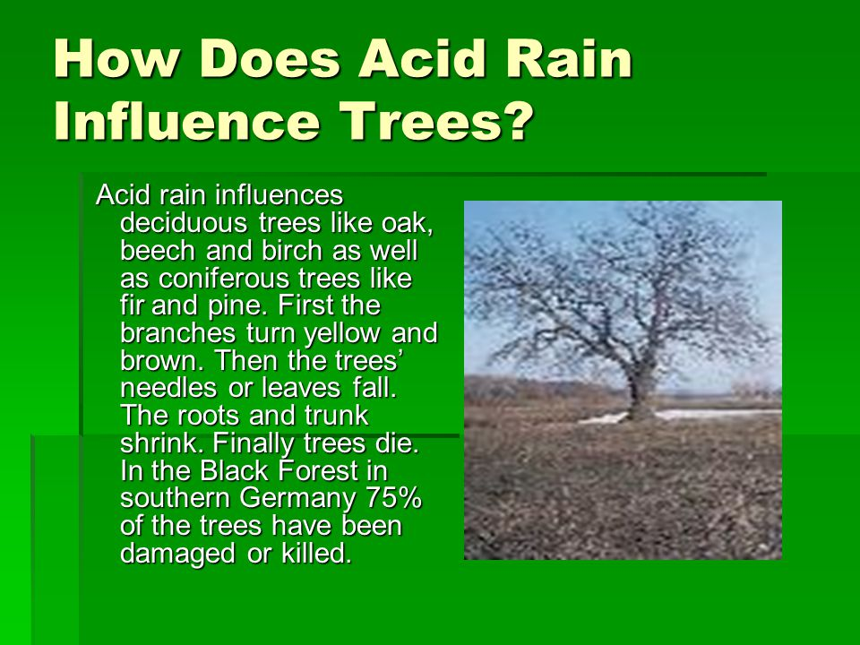 How Does Acid Rain Influence Trees.