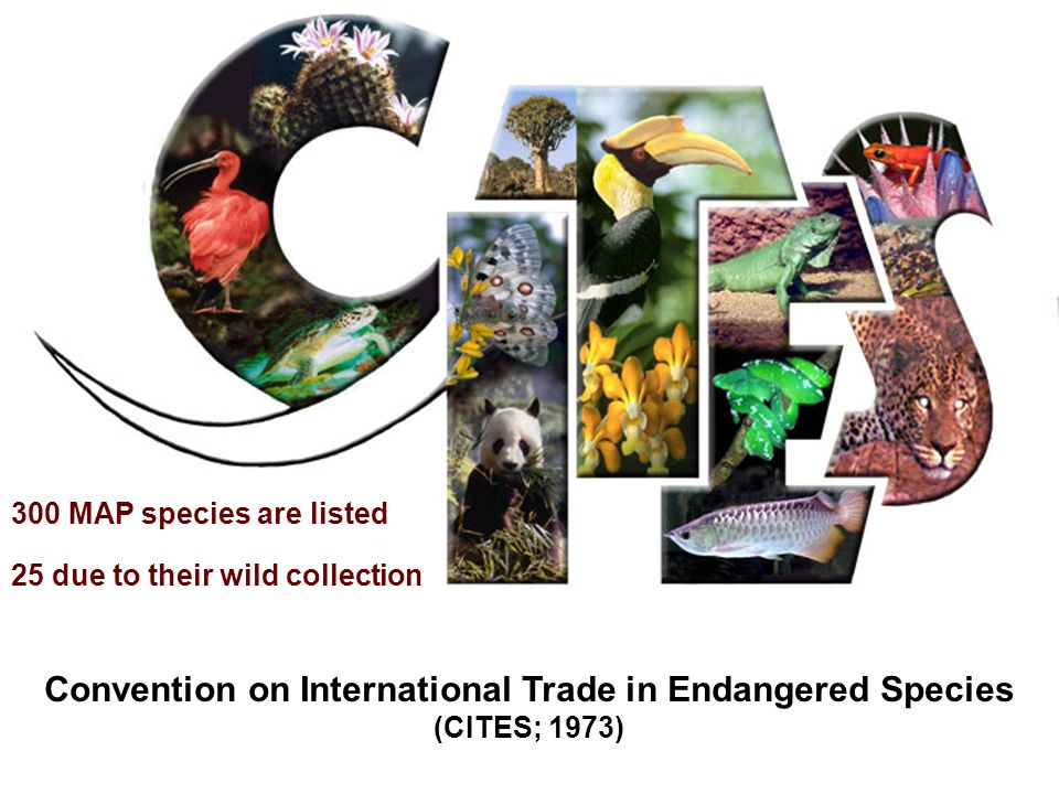 Convention on International Trade in Endangered Species (CITES; 1973) 300 MAP species are listed 25 due to their wild collection