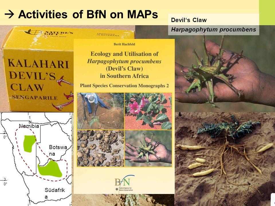 Activities of BfN on MAPs Namibia Botswa na Zimbab we Südafrik a 3 0° 2 0° 1 8° 2 8° Devils Claw Harpagophytum procumbens