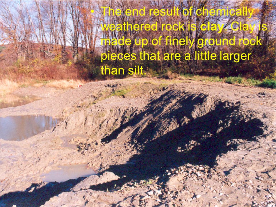 Biological Weathering Biological weathering is caused by living organisms.
