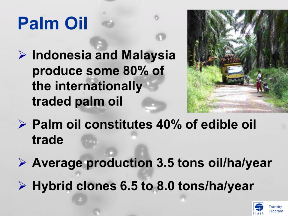 Forestry Program Palm Oil Indonesia and Malaysia produce some 80% of the internationally traded palm oil Palm oil constitutes 40% of edible oil trade