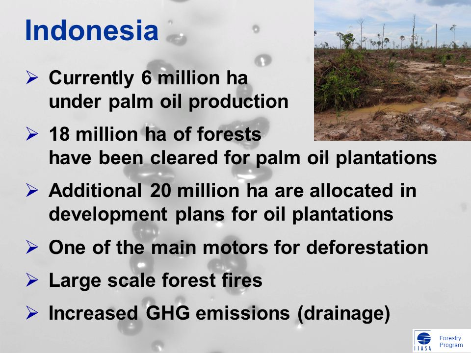 Forestry Program Indonesia Currently 6 million ha under palm oil production 18 million ha of forests have been cleared for palm oil plantations Additional 20 million ha are allocated in development plans for oil plantations One of the main motors for deforestation Large scale forest fires Increased GHG emissions (drainage)