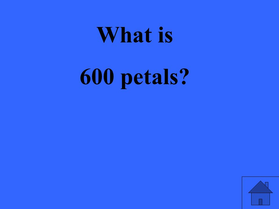 What is 600 petals?