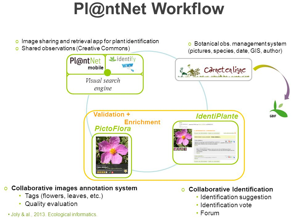 Validation + Enrichment IdentiPlante PictoFlora o Image sharing and retrieval app for plant identification o Shared observations (Creative Commons) o Botanical obs.