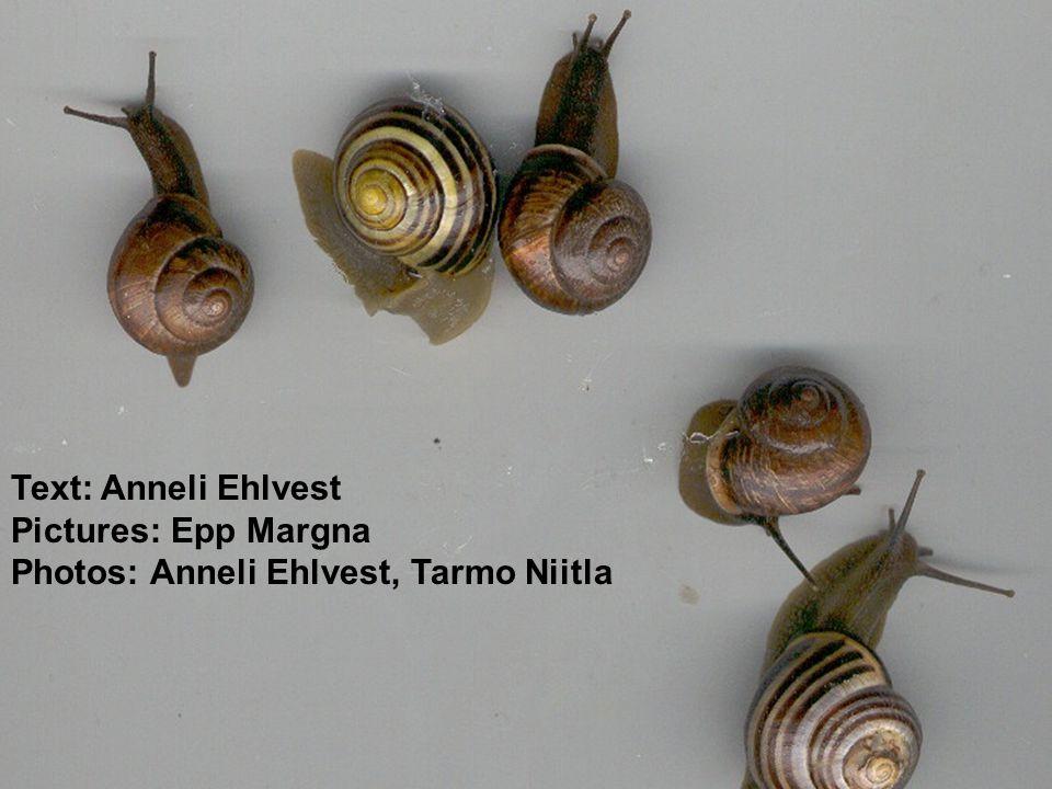 Text: Anneli Ehlvest Pictures: Epp Margna Photos: Anneli Ehlvest, Tarmo Niitla