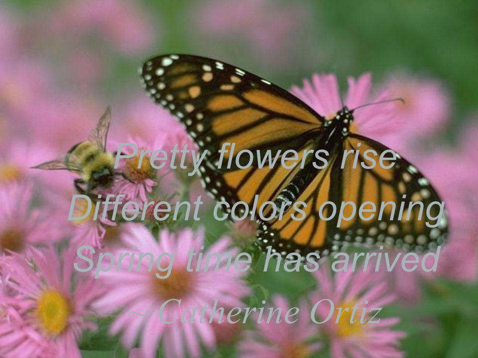 Haiku The dew in morning Hang on the flower petal Clean and shiny… - Bingjie Xue (Feb. 2007)