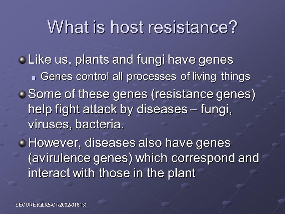 SECURE (QLK5-CT-2002-01813) What is host resistance.
