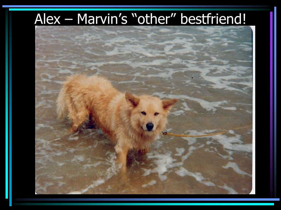Alex – Marvins other bestfriend!