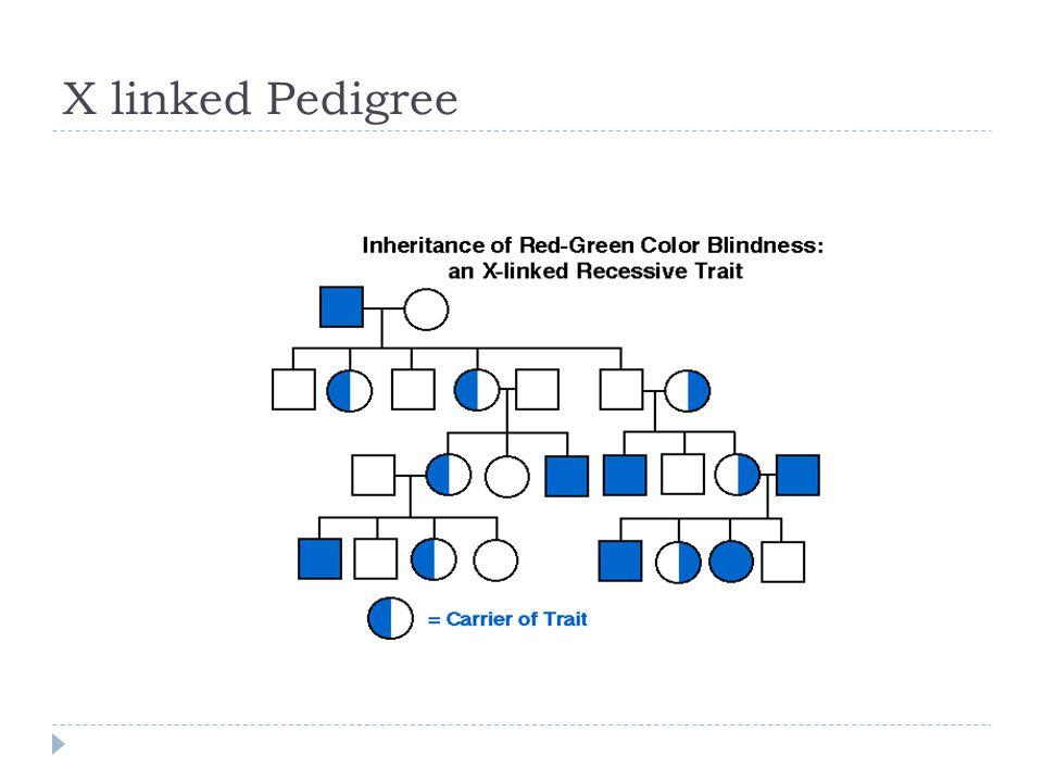 X linked Pedigree