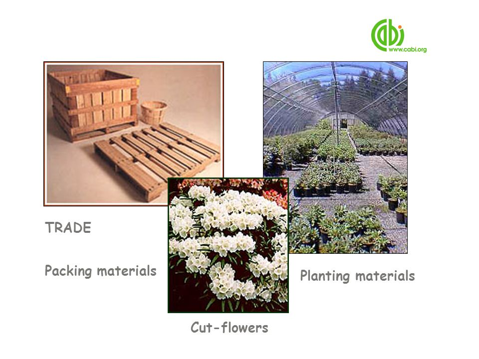 Packing materials Cut-flowers Planting materials TRADE