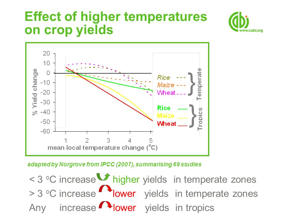 Effect of higher temperatures on crop yields < 3 o C increase higher yields in temperate zones > 3 o C increase lower yields in temperate zones Any increase lower yields in tropics adapted by Norgrove from IPCC (2007), summarising 69 studies