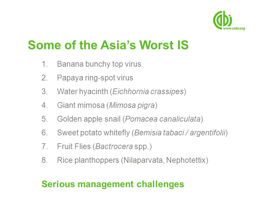 Some of the Asias Worst IS 1.Banana bunchy top virus 2.Papaya ring-spot virus 3.Water hyacinth (Eichhornia crassipes) 4.Giant mimosa (Mimosa pigra) 5.Golden apple snail (Pomacea canaliculata) 6.Sweet potato whitefly (Bemisia tabaci / argentifolii) 7.Fruit Flies (Bactrocera spp.) 8.Rice planthoppers (Nilaparvata, Nephotettix) Serious management challenges