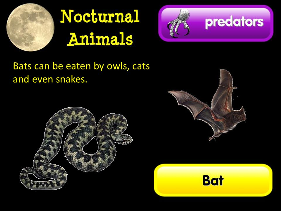 Bats can be eaten by owls, cats and even snakes.